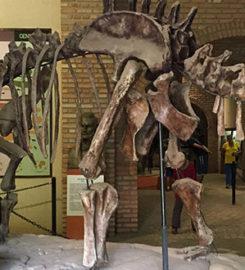Museu de História Natural da UFMG