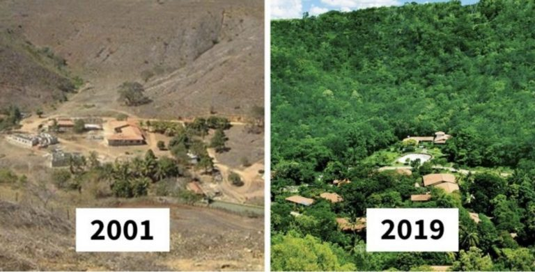 floresta replantada | Fonte: Razões para Acreditar